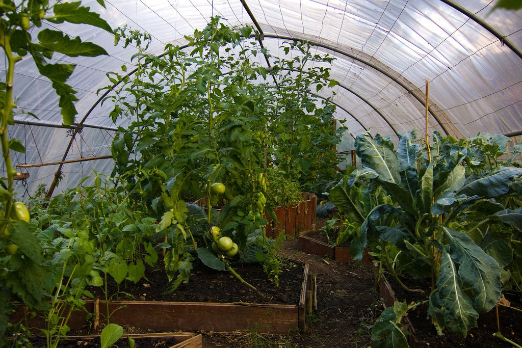 Hoop green houses