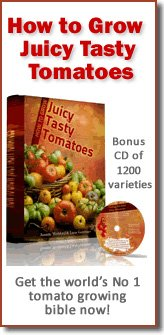 How to Grow Juicy Tasty Tomatoes Book