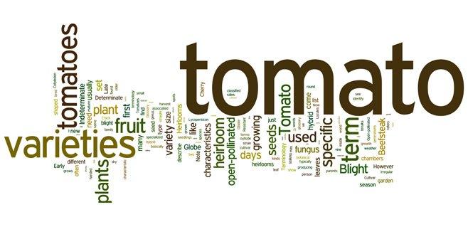 tomato terminology