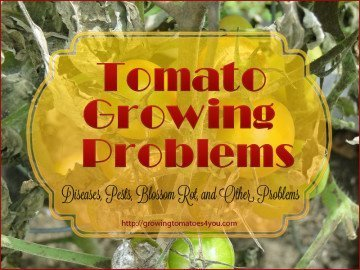 Growing Tomato Problems