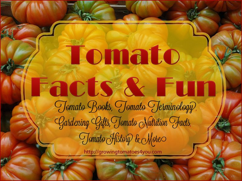 Tomato Plant Facts and Fun Stuff