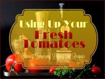 using up fresh tomatoes-canning-freezing-drying and recipes