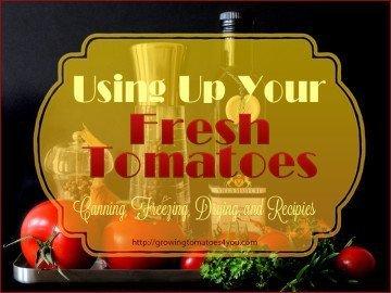 using up fresh tomatoes-canning-freezing-drying and recipes