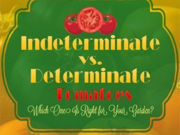 Indeterminate vs Determinate Tomatoes