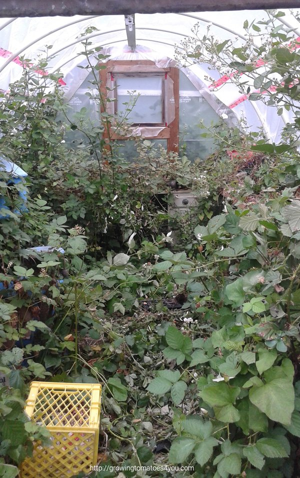 PVC pipe hoop greenhouse invaded