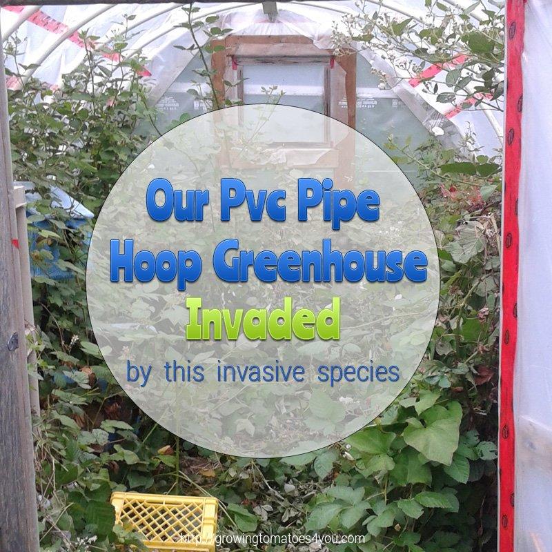 Pvc Pipe Hoop Greenhouse